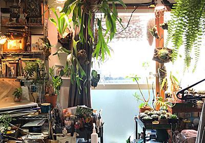 植物が「私だけの時間」を豊かにしてくれた。ワンルームで約180の植物を育てる私がおすすめしたい、植物のある暮らし | Fun Pay! | あたらしい自分、はじめよう。楽天カード
