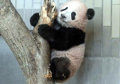 上野動物園:パンダ観覧予約の申し込み殺到 - 毎日新聞
