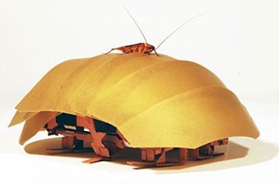 潰されても動きまわる「ゴキブリの謎」を応用したロボット(動画あり) WIRED.jp