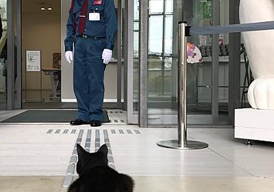 """「ここに仲間の気配がするニャ……」 尾道市""""猫まみれ展""""に黒猫が侵入を試みる事案が発生 - ねとらぼ"""