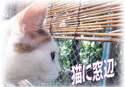 京都夏のうまいもん37度超え・・夏といえばコロナ渦で激安関西の鱧&うまい外国産マグロ&半熟だし巻き - いげのやま美化クラブ