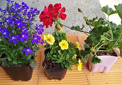 花を買ってきました。 - おっさんのblogというブログ。