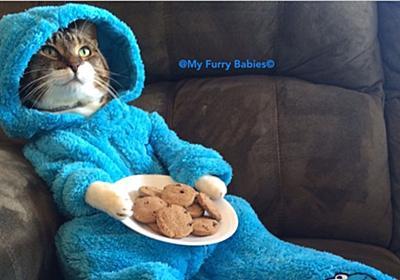 在豪アメリカ大使館、ネコの写真を誤送信して謝罪 - ねとらぼ