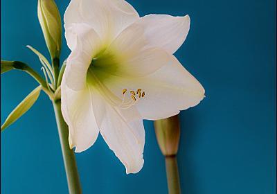 「世界に一つだけの花」の後遺症
