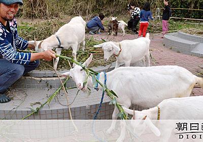 ヤブ覆う公園、ヤギが復活させる 島の環境守るシンボル:朝日新聞デジタル
