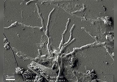 CNN.co.jp : ベスビオ噴火の遺体、頭蓋骨から無傷の脳細胞発見 伊研究