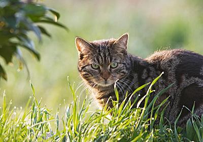 ネコの影響は爬虫類でも甚大、全体を減らす可能性 | ナショナルジオグラフィック日本版サイト
