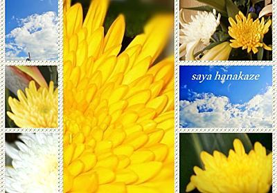 菊始開の時候❁それでもって菊三昧 - 花風 咲彩の四季折々