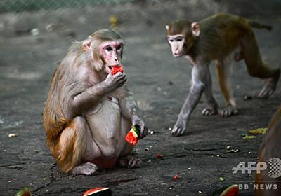 新型コロナ、自然感染とワクチンで免疫獲得 サル実験で確認 写真4枚 国際ニュース:AFPBB News