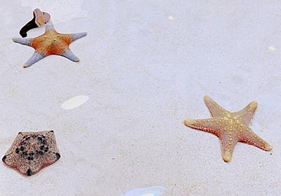 【沖縄旅行2泊3日モデルコース】ゆったりお魚さん鑑賞とローカルグルメの旅 - 良い暮らし★観光日誌