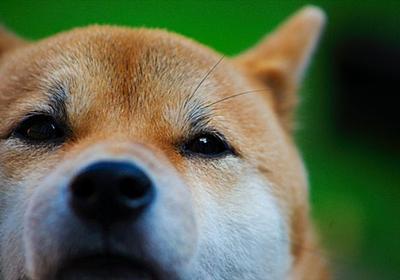 すべてのイヌは、ヨーロッパかアジアから生まれている:研究結果|WIRED.jp