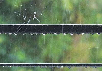 日本人が無駄にしている「雨水」は飲めるのか | 意外と知らない「暮らしの水」ウソ?ホント? | 東洋経済オンライン | 社会をよくする経済ニュース