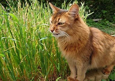 梅雨の真っただ中、晴れ間を探して猫とお庭散歩 - 愛猫トトとチーと父さんの生活