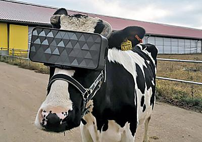 VRヘッドセットで牛に「仮想の牧草地」を体験させて牛乳の生産量を上げる試み - GIGAZINE