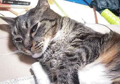 薬がなくなった|猫を撫でて一日終わる|pha - 幻冬舎plus