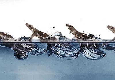 【電子版】ヤモリ、空気の空間作りながら水上走行 欧米チームが解明 | 科学技術・大学 ニュース | 日刊工業新聞 電子版