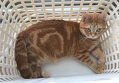 我が家の猫のモーニングルーティンは洗濯カゴに入ることです - むぎちゃんにグルメを添えて