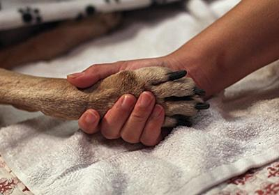CNN.co.jp : 犬に原因不明の疾患、全土で急死相次ぐ ノルウェー