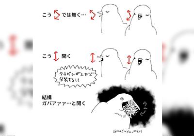 「意外とエグい」「鳥を飼ってるけど気づかなかった」鳥のくちばしの開き方の一般的なイメージと実際にだいぶ違いがある件 - Togetter