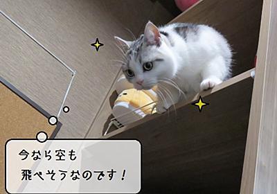 猫雑記 ~バテ気味の長毛猫様達と活力みなぎる短毛猫様~ - 猫と雀と熱帯魚
