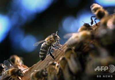 ドイツ、「昆虫保護法」の制定検討 環境相、殺虫剤の使用削減など計画 写真1枚 国際ニュース:AFPBB News