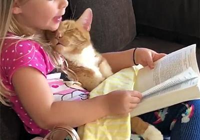 今日はどんなお話が聞きたい?ヒザの上で眠る猫に読み聞かせをする少女 : カラパイア