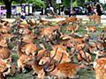 奈良国立博物館の換気口に100頭を超えるシカ集まる 専門家も理由わからず - ライブドアニュース