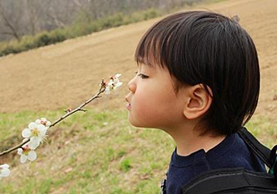 春だよ!山菜だよ!2歳の息子と敷地内に生える山菜を収穫して食べました! - 絵描きパパの育児実験記ロクLABO