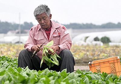 衆院選・コロナ下の選択:「人手不足、何年続くのか」 来日できない技能実習生 嘆く農家/7 | 毎日新聞