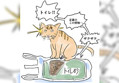猫さん『足裏のこの感触は…トイレ!』お待ち下さい!と懇願する事態、経験した人が割といた「あー!違うんです!」 - Togetter