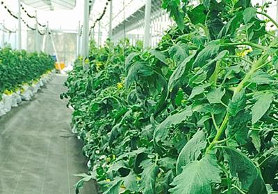 栽培状況をセンサで把握、LINEアプリで診断も--新規就農者がすぐ農業を開始できる「LEAP」 - CNET Japan