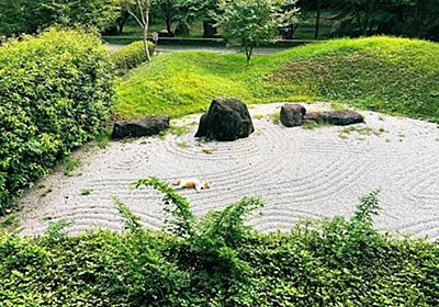 悟りの境地? お寺の庭園で「枯にゃんすい」と化した猫がこちら - コラム - Jタウンネット 東京都