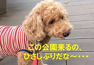 ナナちゃんを探せ! - NANA`S  ROOM