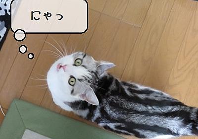 猫雑記 ~鳴かない猫~ - 猫と雀と熱帯魚
