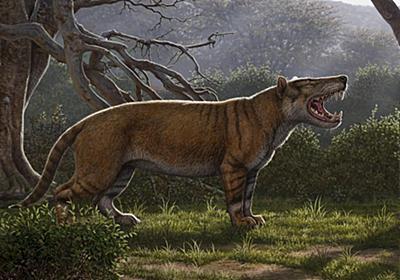 太古の「百獣の王」、新種の絶滅哺乳類を発見 | ナショナルジオグラフィック日本版サイト