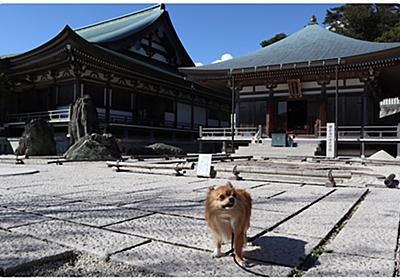 蟲柱・胡蝶シシマルと天上寺の秋 - 主は吾輩の犬である