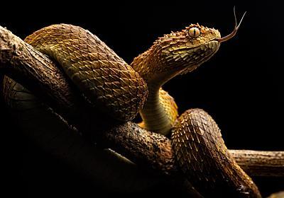 命を奪うヘビの毒 | ナショナルジオグラフィック日本版サイト