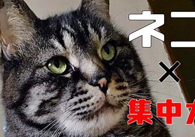 【猫で集中力の効果?】ネコと仕事の意外な関係性? - ごブログ