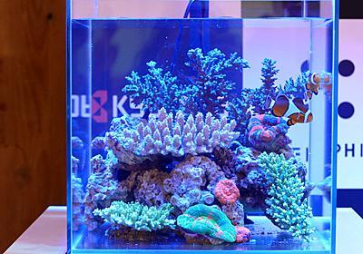 京セラ、世界初のフルスペクトル「アクアリウムLED照明」4色、サンゴや藻類の育成環境を再現 - 家電 Watch