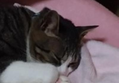 雫の写真6連発♪: 猫好きなシングルマザーまりあんです