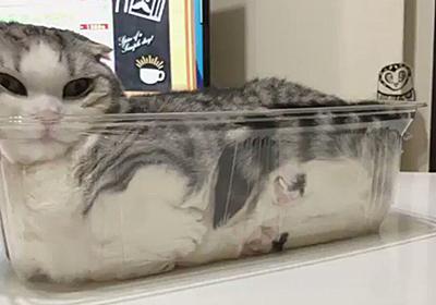 透明なケースにみっちり詰まった猫さんがかわいいニャンコローフになっている「なんで好むんだろう」 - Togetter