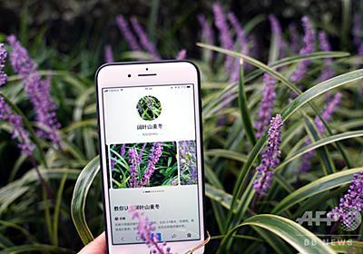 撮影で花認識 植物園と百度が「AI植物園計画」で提携 上海市 写真3枚 国際ニュース:AFPBB News