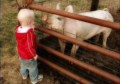 1976年にアメリカ軍で発生した「豚インフルエンザ」の人間への集団感染事例とは? - GIGAZINE