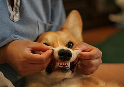 これで痛みとさようなら?口内炎の原因と治療法をまとめてみた - はてなニュース