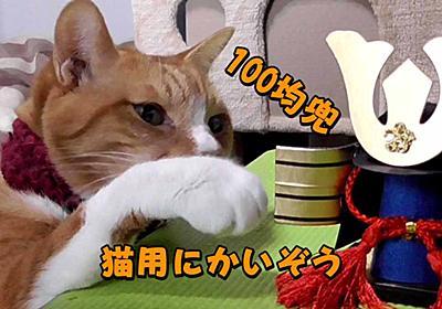 100均の「かざりかぶと」を猫用に改造して武将気分に! | ヒヨリどんの猫日和II