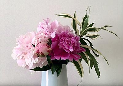 シャクヤクの花の咲き時 - ECOな花活け生活