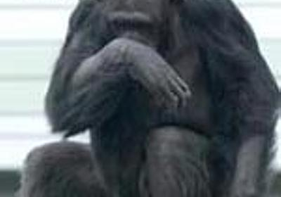 「否認」の深刻さ - apesnotmonkeysの日記
