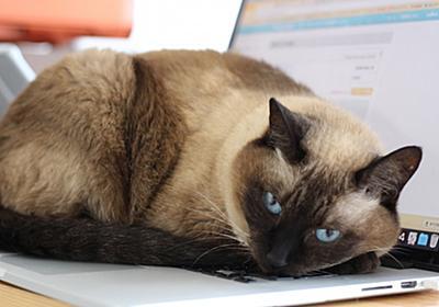 PCの内容を整理する - 生まれ変わるなら猫になりたい🐈