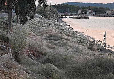 CNN.co.jp : まるでホラー映画、大量のクモの巣が町覆う ギリシャ