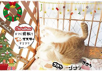 12月は画像加工の季節 - にゃんころころ猫だまり